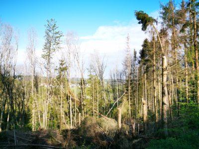 Waldschäden bei Mehren